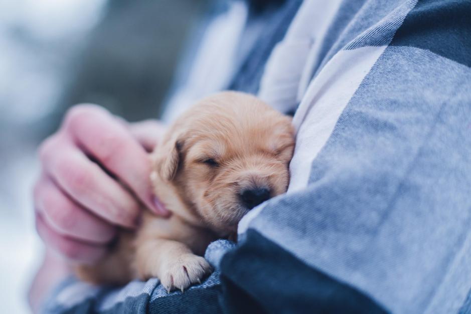 犬, 人, 小さい, 座っている が含まれている画像  自動的に生成された説明